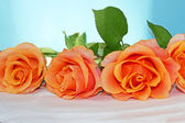 Roses on blue — Stock Photo