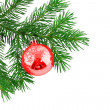Christmas branch fur-tree with boll — Stock Photo