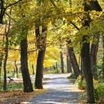 Landscape parfk in autumn — Stock Photo