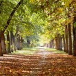 Park in autumn — Stockfoto
