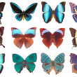 Some various butterflies isolated — Stock Photo