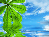 Leaf reflected in water — Stock Photo