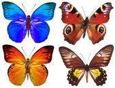 Alcune farfalle vari isolati — Foto Stock