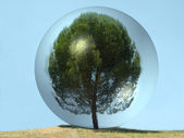 Tree isolated inside glass — Stock Photo