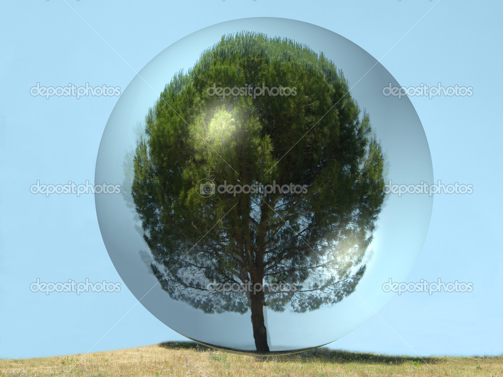 Tree isolated inside glass  Stock Photo #1220125