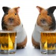 Royalty-Free Stock Photo: Guinea-pig and beer