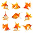 Gold small fishs — Foto Stock
