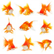 Zlatá malých ryb — Stockfoto