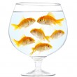 Gold small fishes — Stock Photo