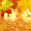 Autumn leaves over water — Stock Photo