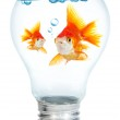 Gold small fish in light bulb — Stock Photo