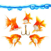 Five small fishes at a hook — Stock Photo