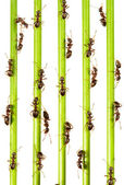 Ants — Стоковое фото