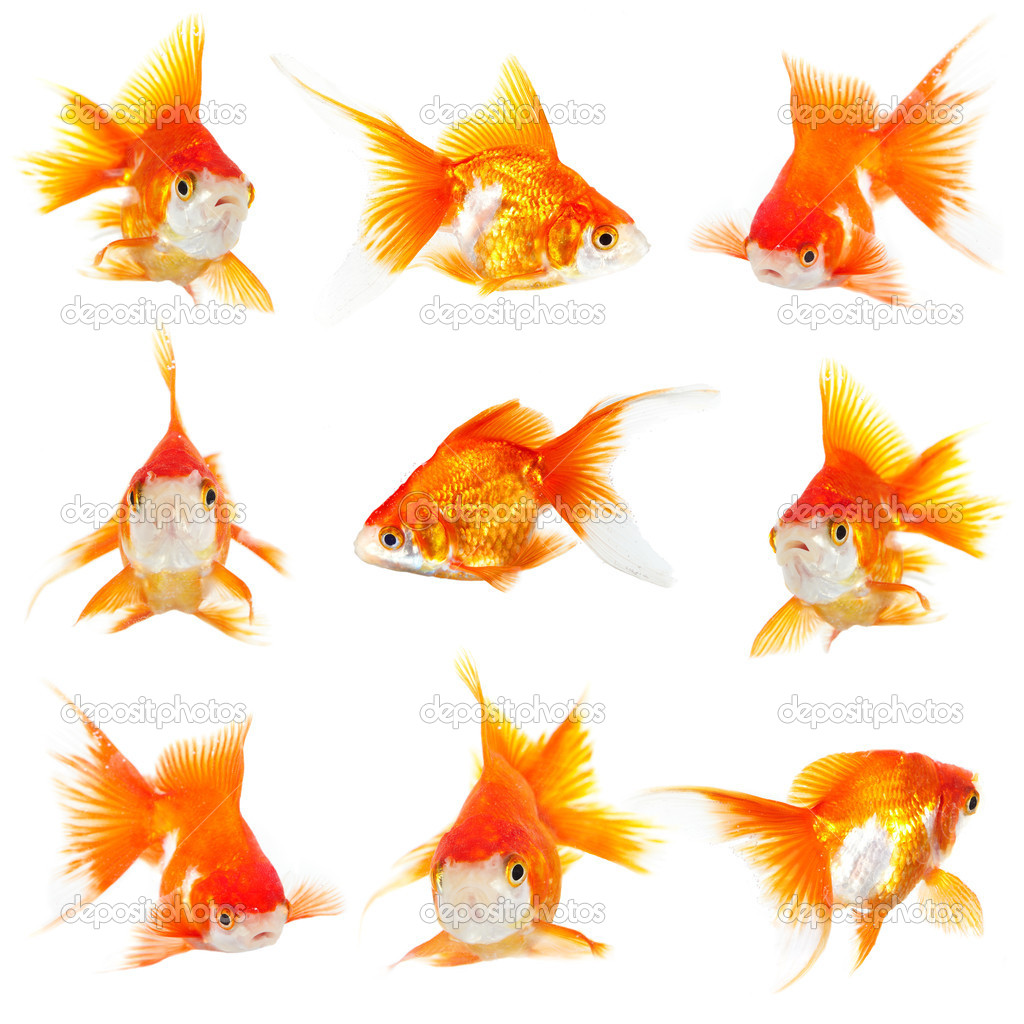 Gold small fishs on a white background — Stock Photo #1189126