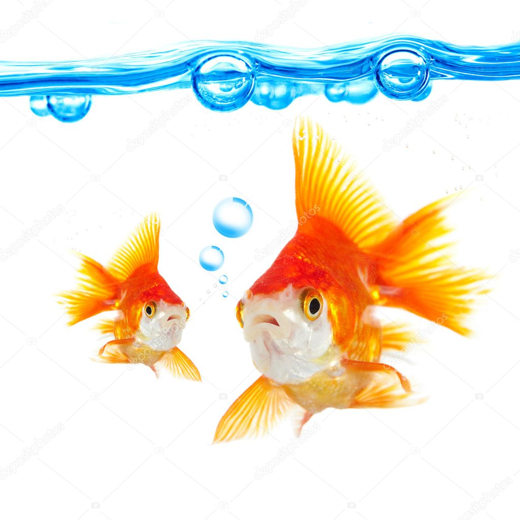 Goldfish and bubbles on a white background — Stock Photo #1189408