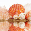 Royalty-Free Stock Photo: Sea cockleshells