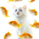 Kitten and fish — Stock Photo