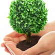 Foto Stock: Human hands and tree
