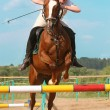 Show jumping — Stock Photo #1191013