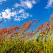 Grassy View — Stock Photo