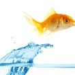 Gold small fish jumps out of water — Stock Photo