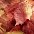 Fallen autumn multi-coloured leaves — Stock Photo