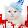 White cat with gifts — Stock Photo