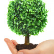 Royalty-Free Stock Photo: Human hands and tree