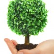 Human hands and tree - Stockfoto