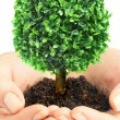 Stock Photo: Human hands and tree