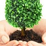 menselijke handen en boom — Stockfoto