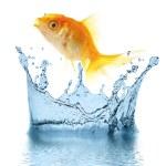 guld små fisk — Stockfoto