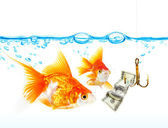 Gold small fishes under water — Stock Photo