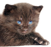 Mały kotek na białym tle — Zdjęcie stockowe