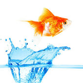 Gold small fish — Stock Photo