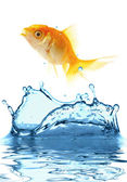The gold small fish — Stock Photo