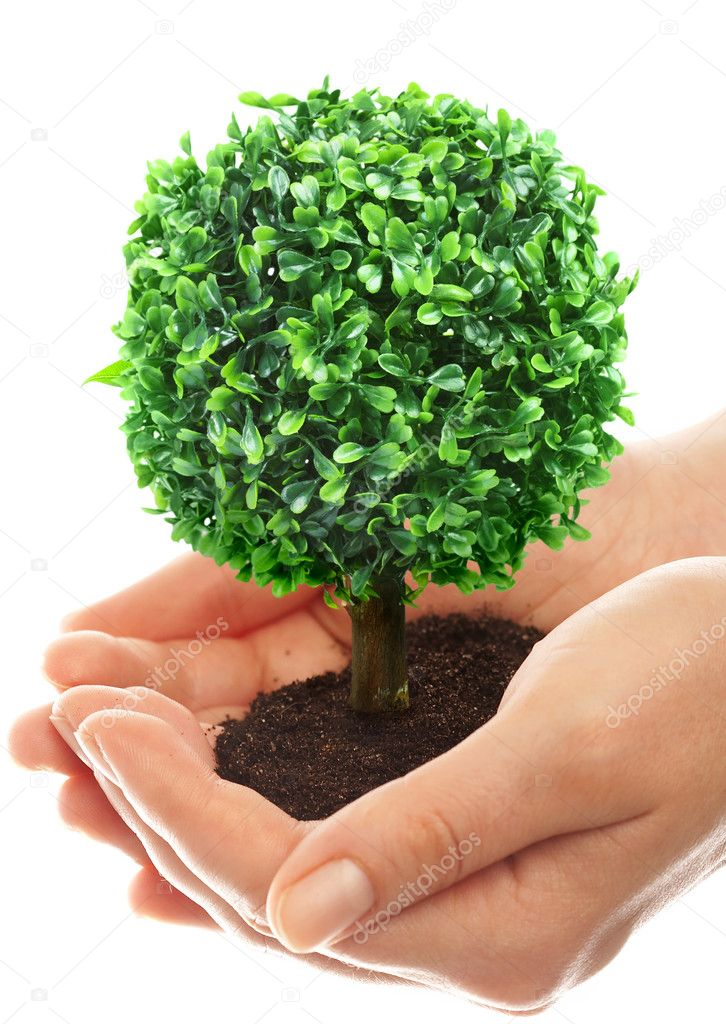 Human hands hold and preserve a young tree — Stock Photo #1190569