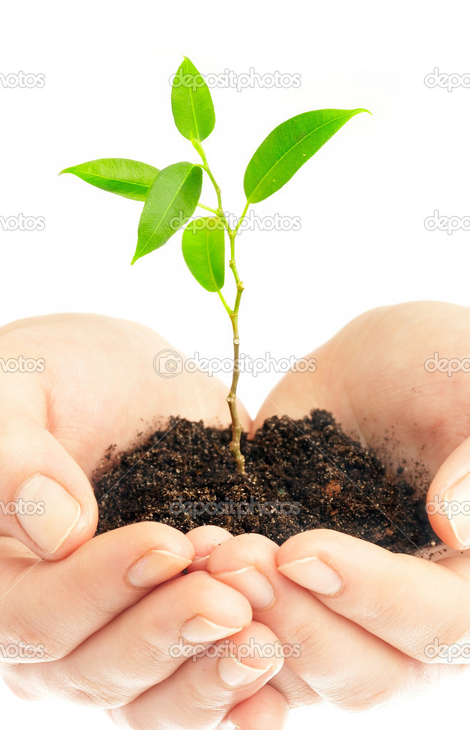 Human hands hold and preserve a young plant — Stock Photo #1190753