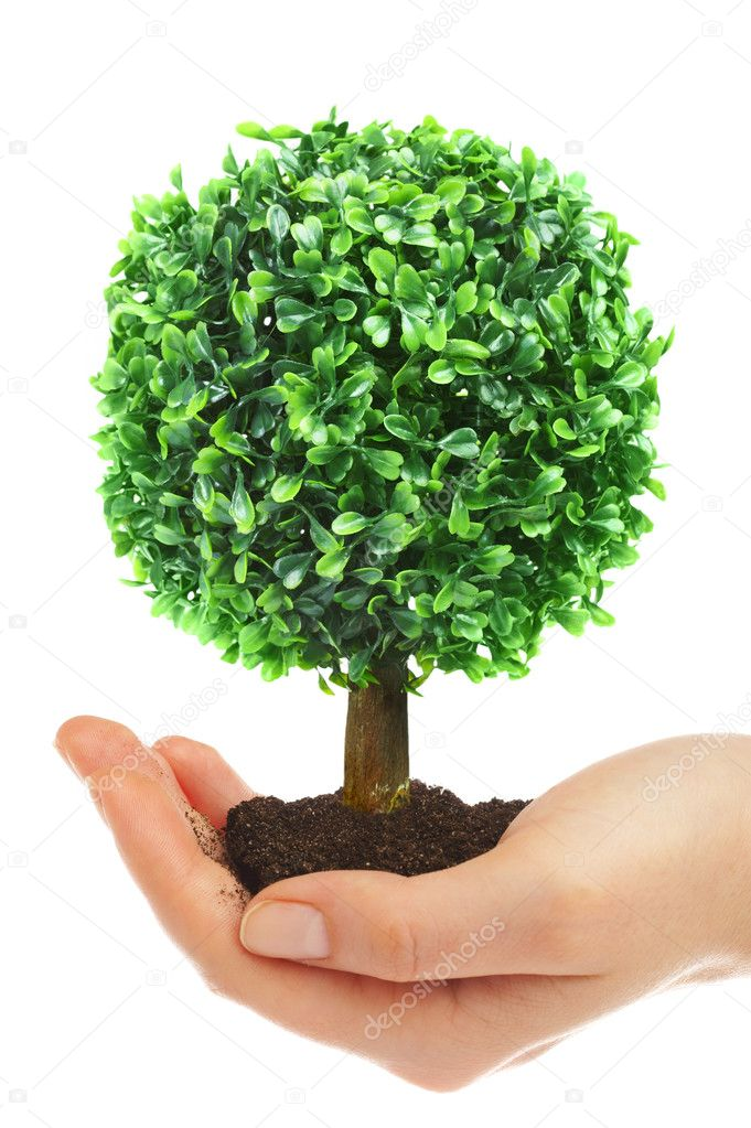 Human hands hold and preserve a young tree  Photo #1192522