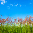Stock Photo: Grassy View