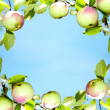 Apples - frame - Stock Photo