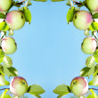 Apples - frame — Stock Photo #1311616