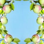 苹果-帧 — 图库照片