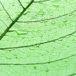 Leaf with drops of water - Foto Stock