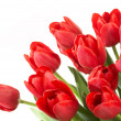 Tulips — Stock Photo #1312740