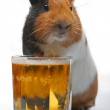 Guinea-pig and beer — Stock Photo #1313313