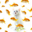 Kitten and fish — Stock Photo