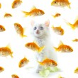 Stock Photo: Kitten and fish