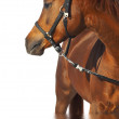 Portrait of a horse of brown color. — Stock Photo #1315417