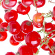 Fresh currant - Photo